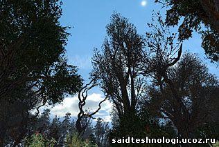 tree_test